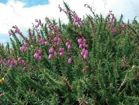 Vegetal landscape in the Pas environment