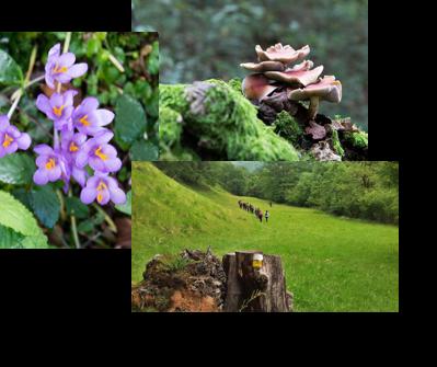 Flores Naturea Cantabria