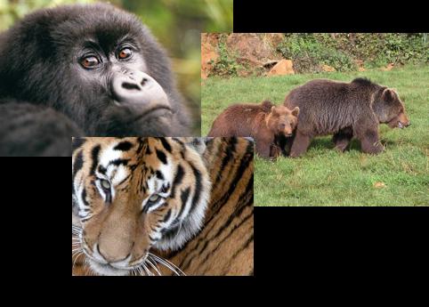 Animales parque de cantabria