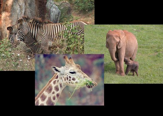 Animales parque de cabárceno